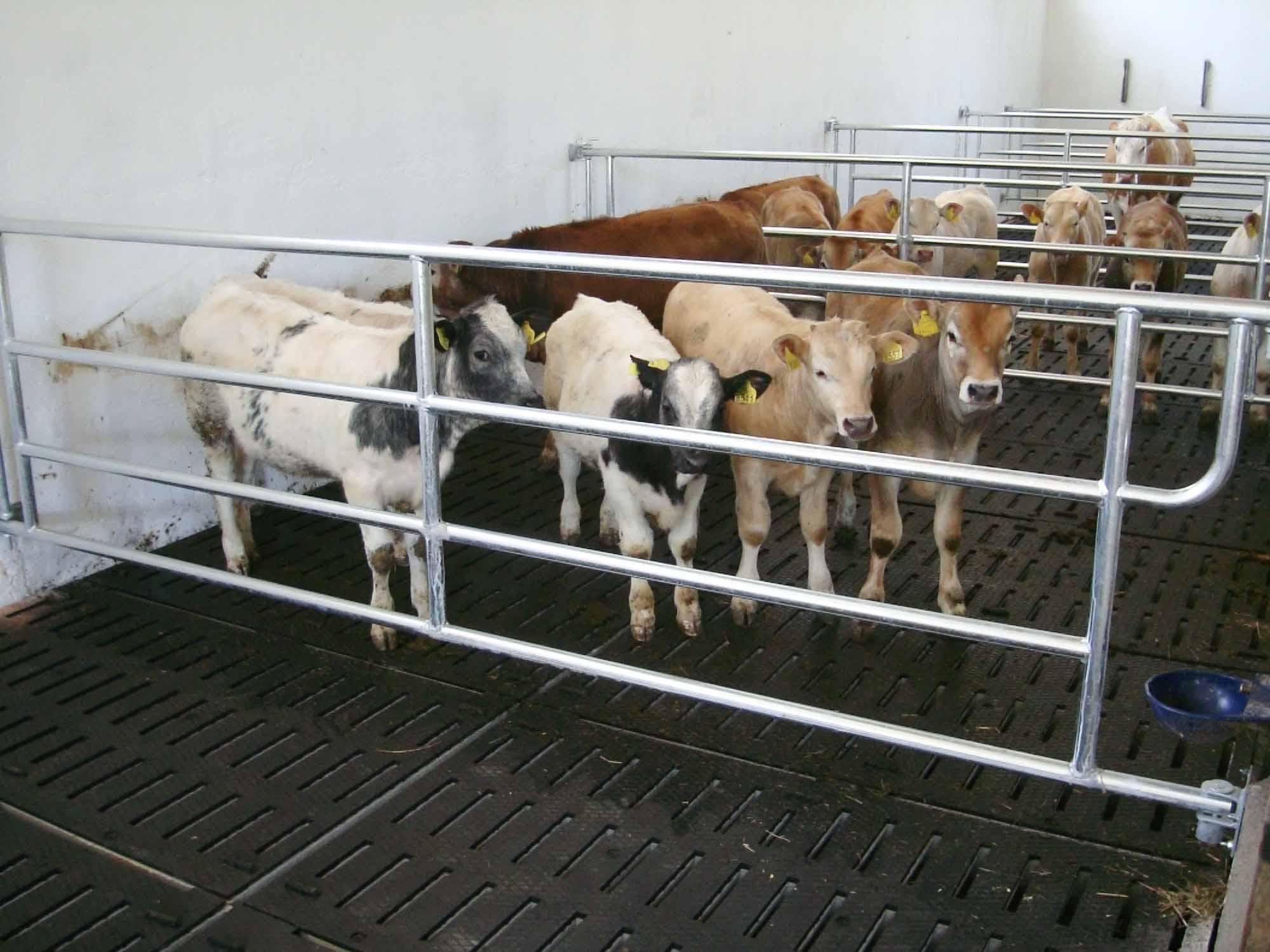 stalla per bovini da carne su grigliato con gomma